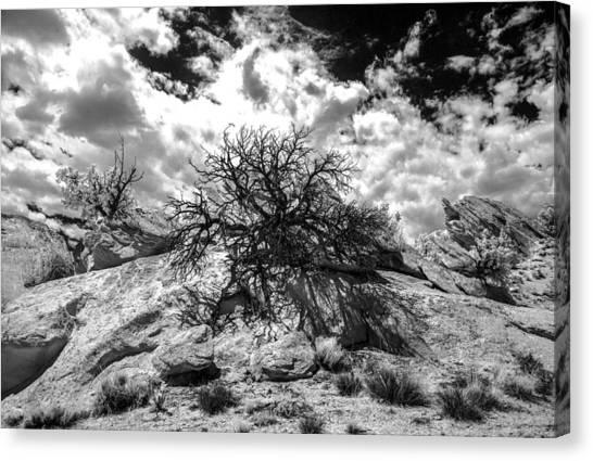 90270 Escalante Tree On Rock Canvas Print