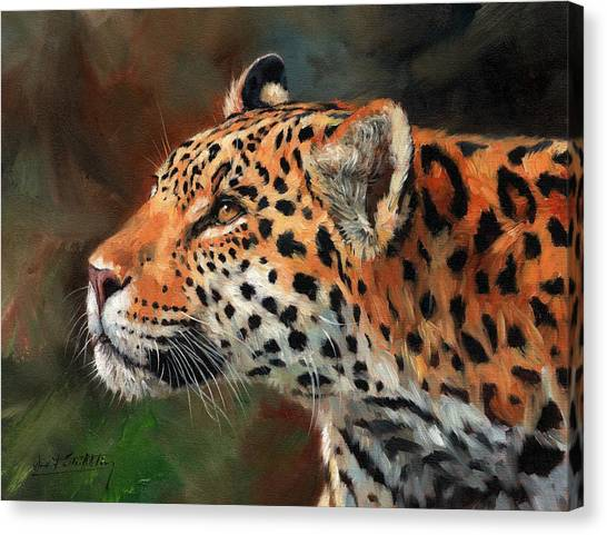 Panthers Canvas Print - Jaguar by David Stribbling