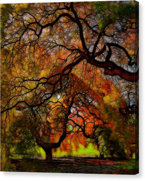 Japanese Maples 2 Canvas Print