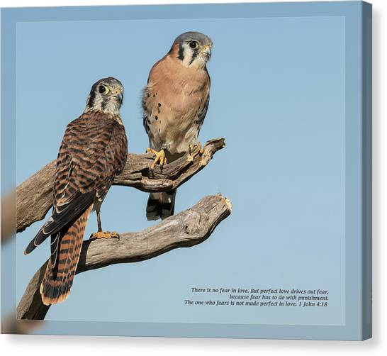 Canvas Print featuring the photograph 1 John 4 18 by Dawn Currie