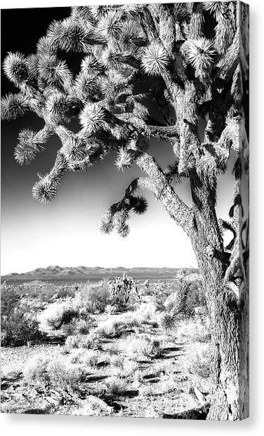 Joshua Tree At Mojave National Preserve In Black And White Canvas Print