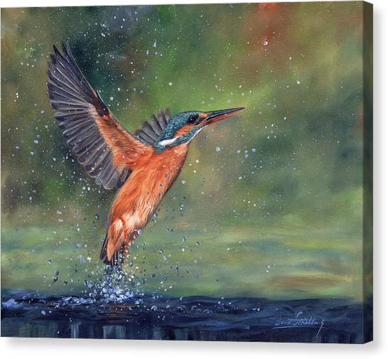 Kingfisher Canvas Print - Kingfisher by David Stribbling
