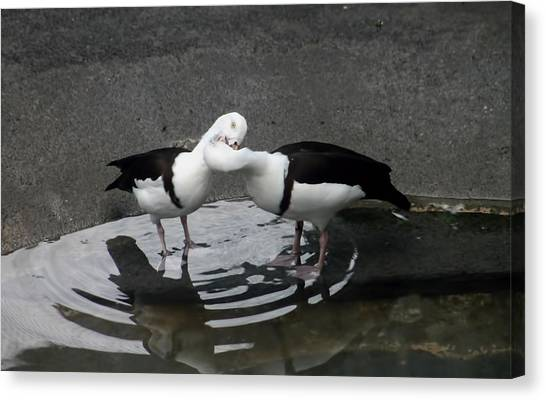 Kissing Ducks Canvas Print