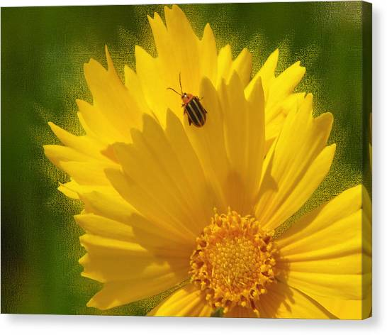 Lady Bug Lookout Canvas Print by Paul Anderson