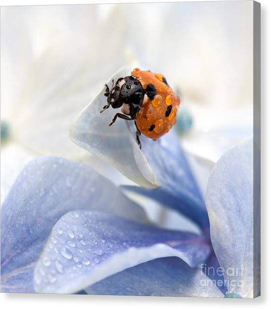 Bug Canvas Print - Ladybug by Nailia Schwarz