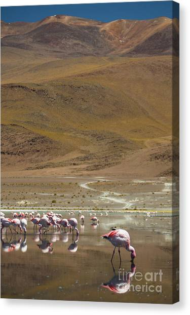 Laguna Colorada, Andes, Bolivia Canvas Print