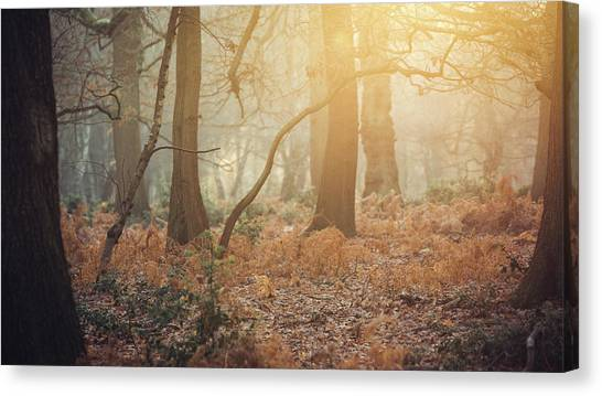 Sherwood Forest Canvas Print - Leaning by Chris Dale