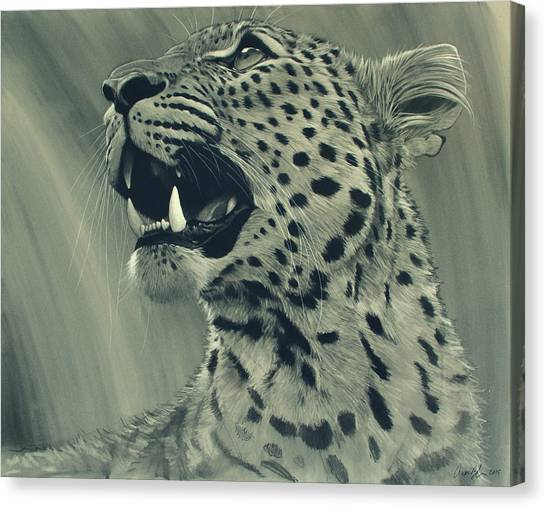 Black And White Canvas Print - Leopard Portrait by Aaron Blaise