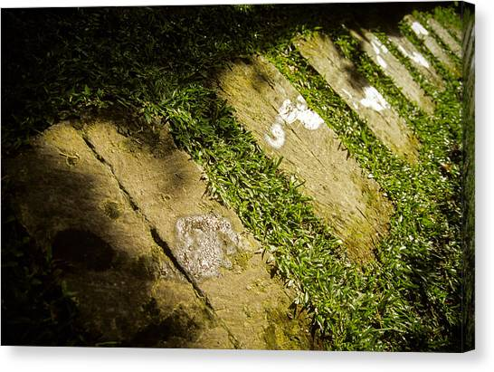 Canvas Print featuring the photograph Light Footsteps In The Garden by T Brian Jones