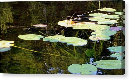 Lily Pads On The Lake Canvas Print