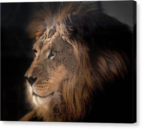 Lion King Of The Jungle Canvas Print