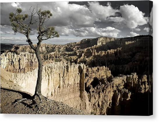 Lone Tree Canyon Canvas Print