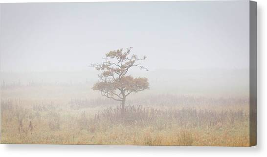 Canvas Print - Lonely Tree by Richard Nixon