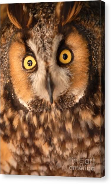 Long Eared Owl Canvas Print by Dennis Hammer