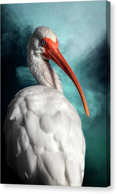Looking Over My Shoulder Canvas Print