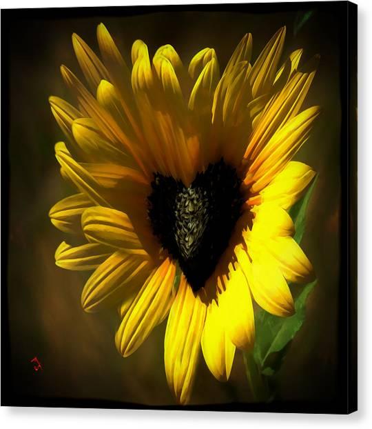 Love Sunflower Canvas Print