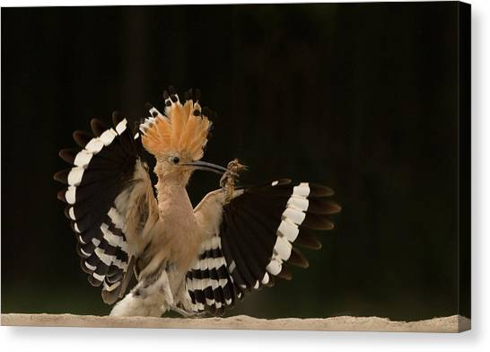 Avian Canvas Print - Lunch Is Ready by Giulio Zanni