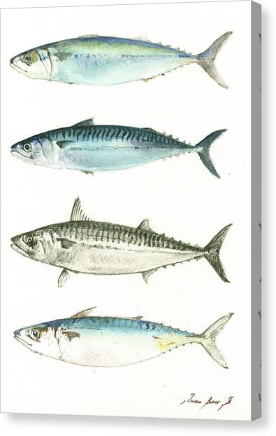 Fishing Canvas Print - Mackerel Fishes by Juan Bosco