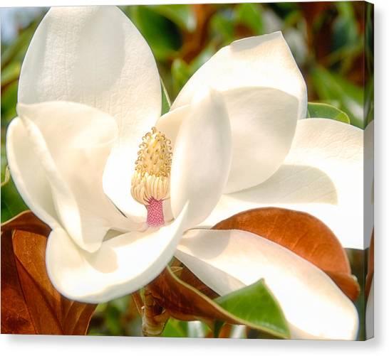 Magnolia Summer Canvas Print