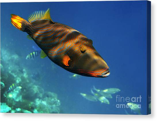 Canvas Print featuring the photograph Maldives by Juergen Held