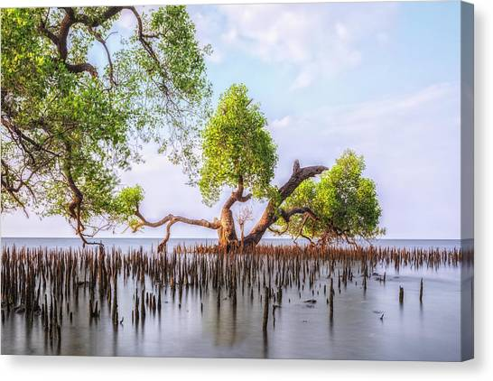 Mangrove Trees Canvas Print - mangrove trees - Java by Joana Kruse