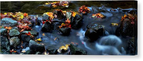 Maple Leaves-0002 Canvas Print by Sean Shaw