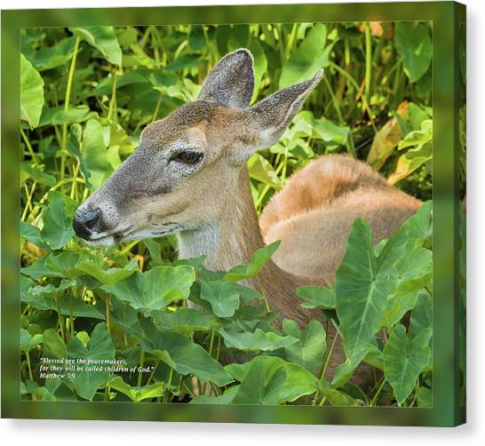 Canvas Print featuring the photograph Matthew 5 9 by Dawn Currie
