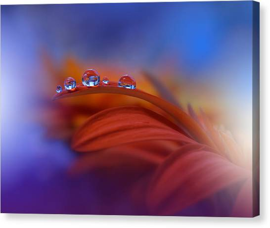 Drops Canvas Print - Metamorphosis by Juliana Nan