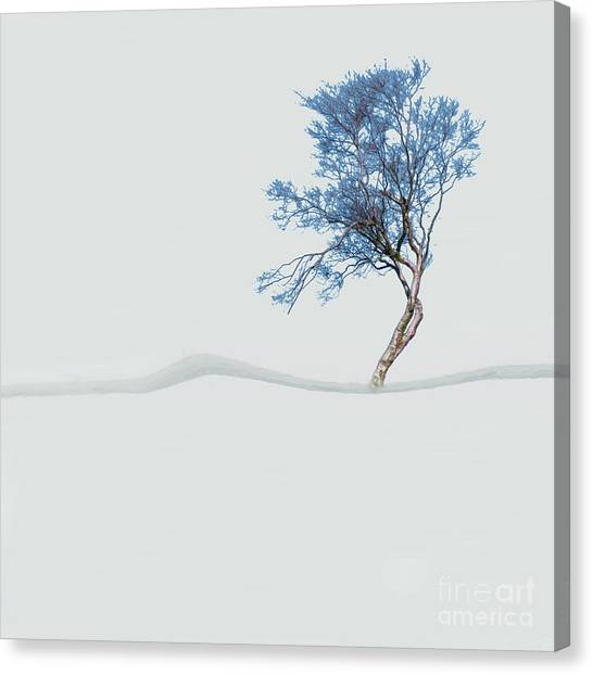 Mindfulness Tree Canvas Print