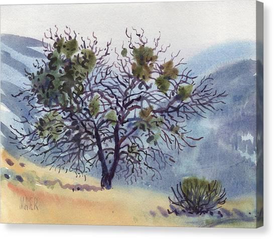 Mistletoe Canvas Print - Mistletoe On Mt Tamalpais by Donald Maier