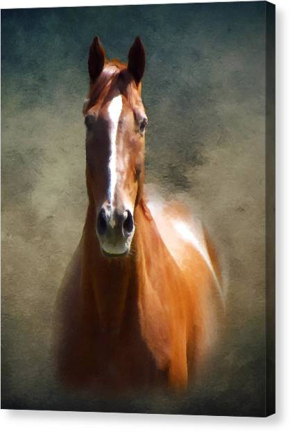 Horses Canvas Print - Misty In The Moonlight P D P by David Dehner