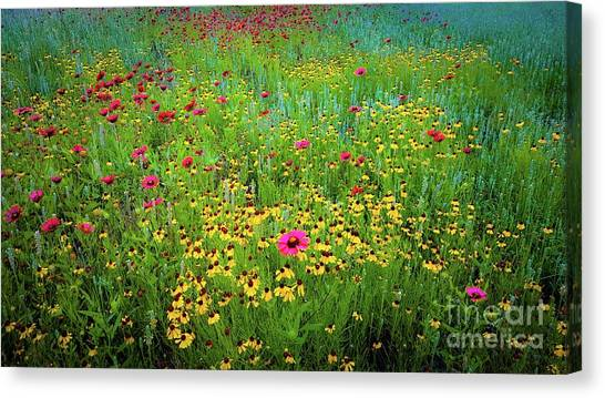 Mixed Wildflowers In Bloom Canvas Print