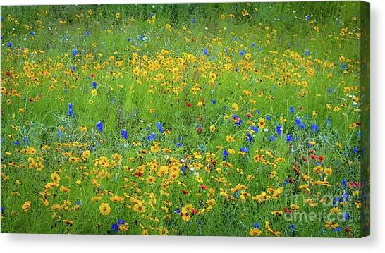 Mixed Wildflowers In Texas 538 Canvas Print