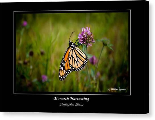 Monarch Harvesting Canvas Print by Mathias Rousseau