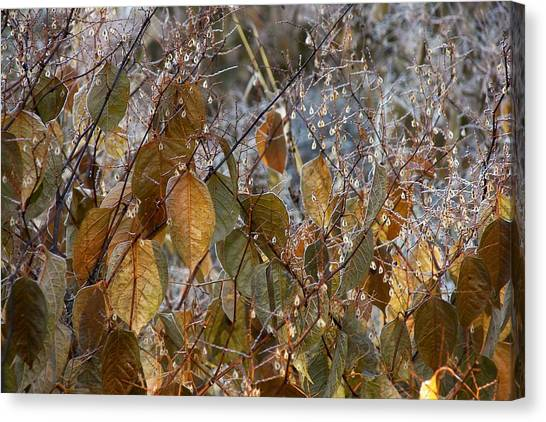 Morning Frozen Canvas Print by JAMART Photography