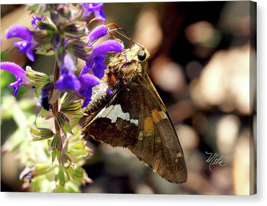 Moth On Purple Flower Canvas Print