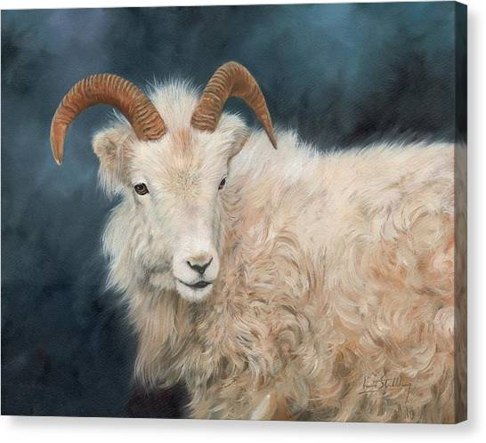 Goats Canvas Print - Mountain Goat by David Stribbling