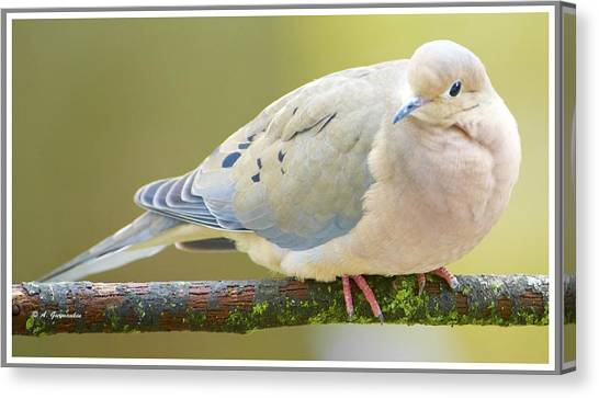 Mourning Dove On Tree Branch Canvas Print