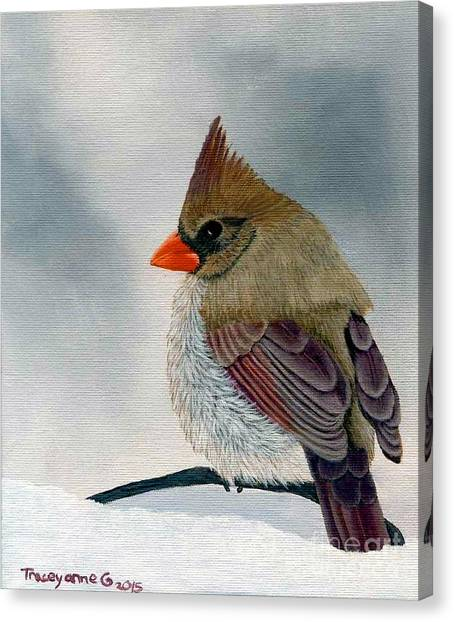 Mrs. Cardinal Canvas Print