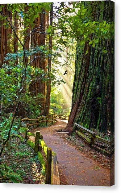 Redwood Forest Canvas Print - Muir Woods by Patricia Stalter