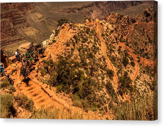 Mule Train In Grand Canyon Canvas Print