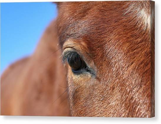 Mustang Macro Canvas Print