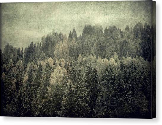 Mystic Woods Canvas Print