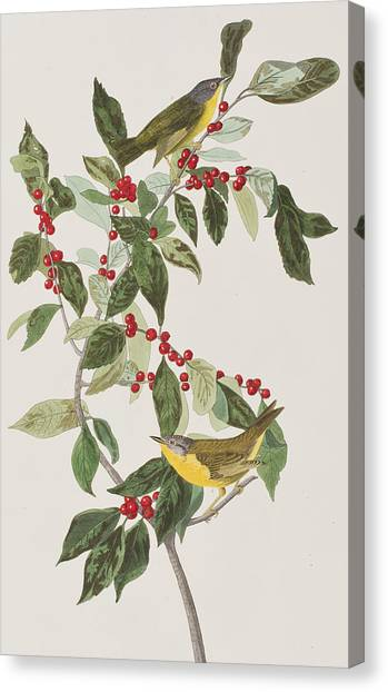 Warblers Canvas Print - Nashville Warbler by John James Audubon