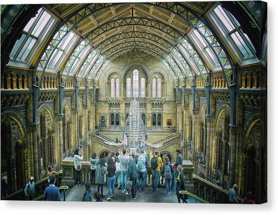 Natural History Museum Canvas Print - Natural History Museum London by Martin Newman