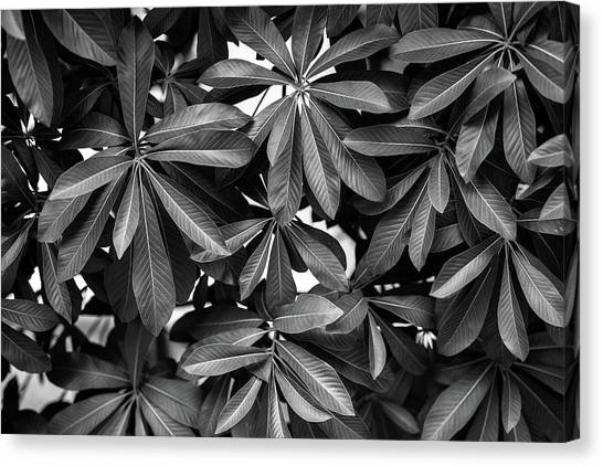 Nature Background, Green Leaves, Flowers In Natural Light And Sh Canvas Print