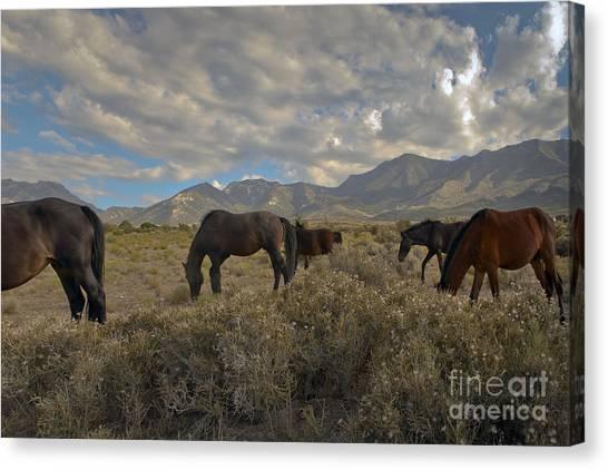 Nevada Canvas Print by Glenn Vidal