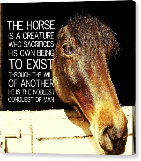 Noble Morgan Stallion Quote Canvas Print