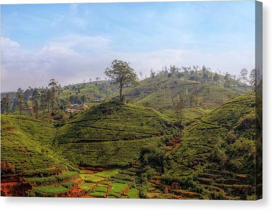 Tea Leaves Canvas Print - Nuwara Eliya - Sri Lanka by Joana Kruse