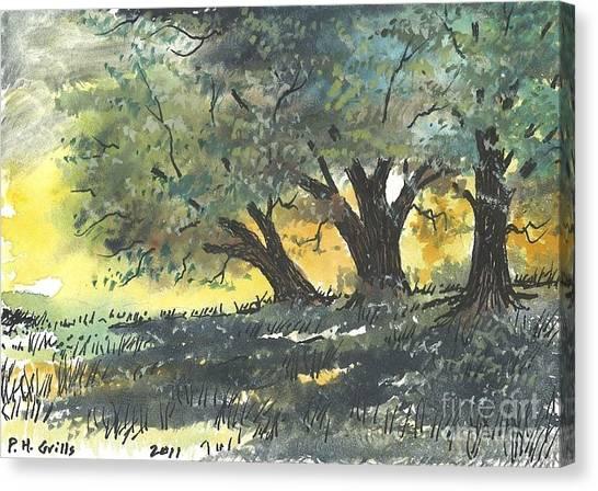 Old Oaks Canvas Print